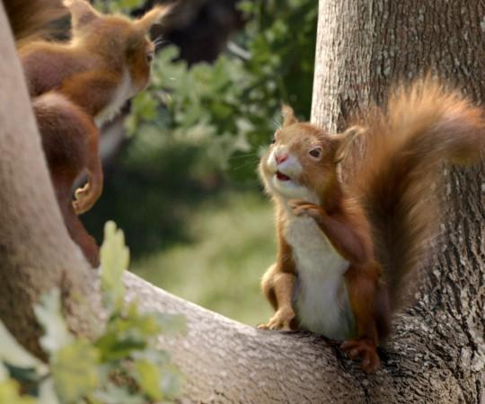 All Bran Squirrels