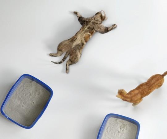 Cat's Pride Passout