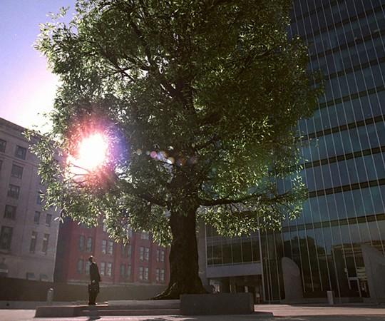Johnnie Walker Tree