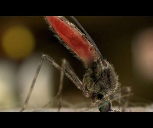 X-Box Mosquito
